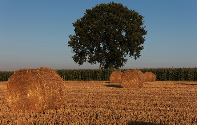 /problems/haybales/file/statement/en/img-0001.jpg